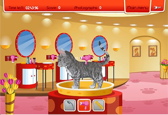 juegos de gatos en internet