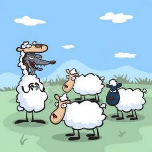 Jugar para atrapar ovejas